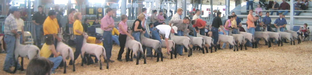 Midwest Stud Ram Sale Ring