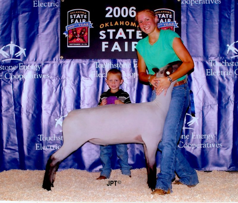 2006 State Fair Champion Hampshire Ewe