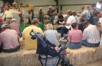 Ringside at Production Sale 2001