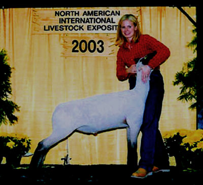 Champion Shropshire 2003 NAILE