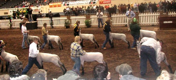 Showing for Champion Hampshire 2005